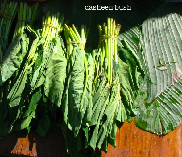 dasheen bush