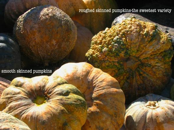 pumpkinpic