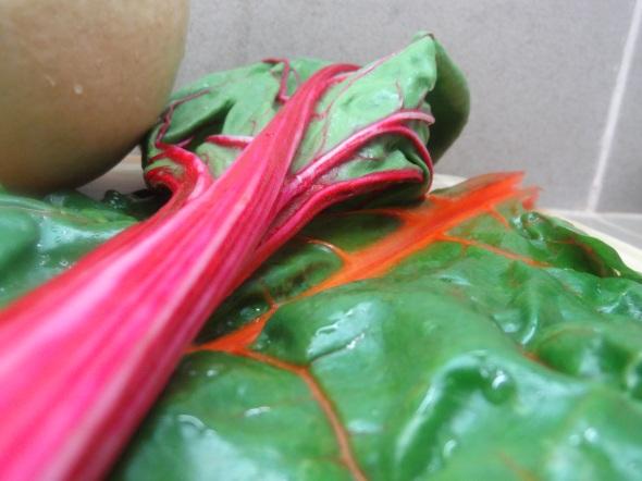 colorful swiss chard